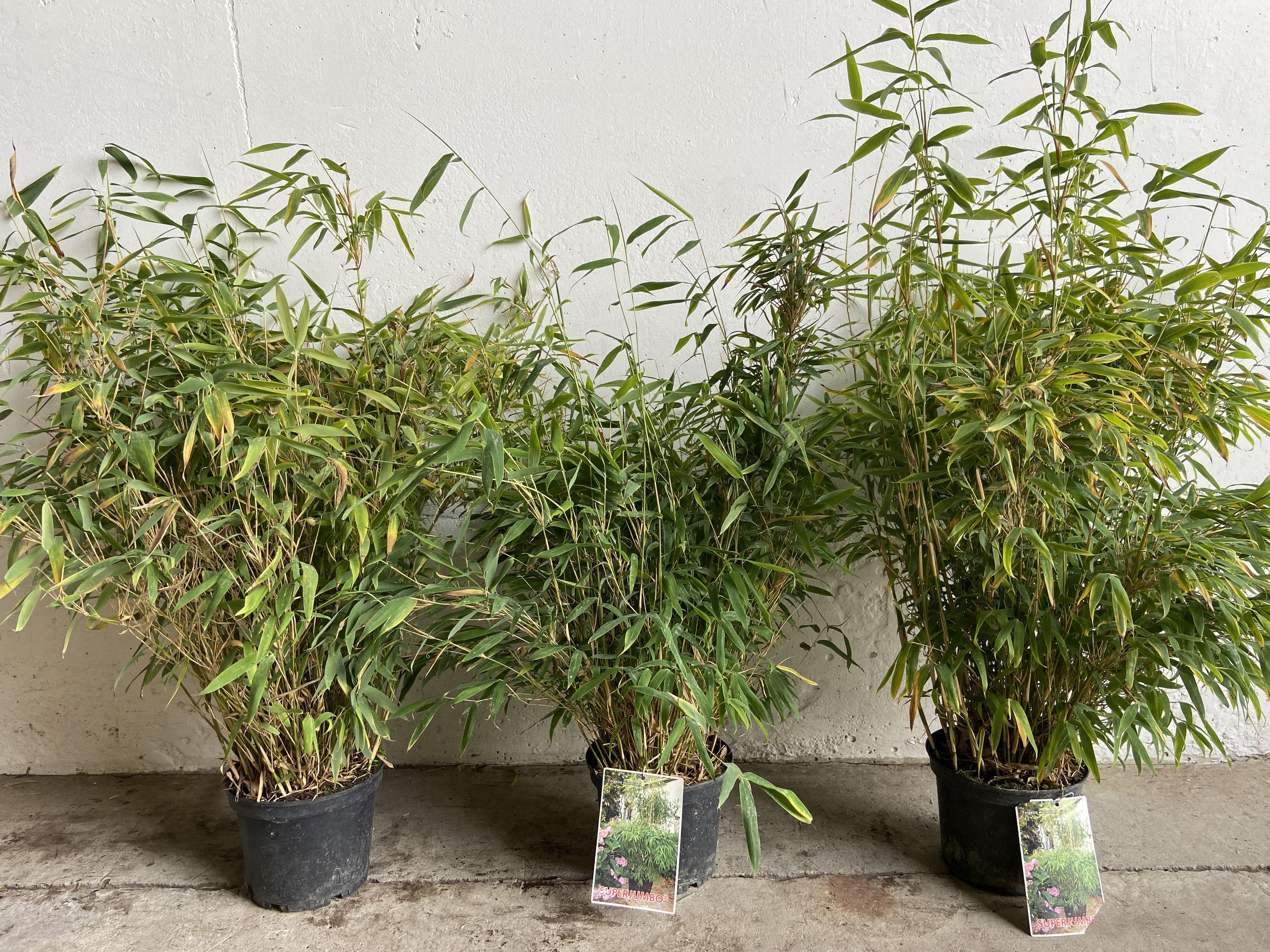 Guido Van de Steen - meer dan 2000 soorten planten voor professionals en particulieren